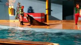De walrus toont Royalty-vrije Stock Fotografie