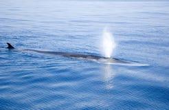 De walvis blaast! royalty-vrije stock foto's