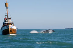 De walvis toont Royalty-vrije Stock Foto