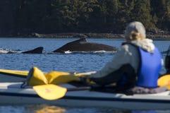De walvis van de kajak en van de Gebochelde Stock Fotografie