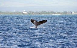 De walvis van Waikiki stock afbeelding