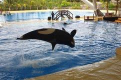 De walvissen tonen in Loro Parque Stock Fotografie