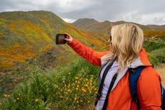 De wandelaar van de blondevrouw neemt een selfie met een celtelefoon terwijl in Walker Canyon, die van de Papavers van Californië stock foto's