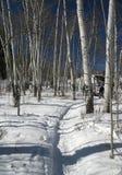 De wandelaar van de sneeuwschoen, schaduwen van espen Royalty-vrije Stock Afbeeldingen