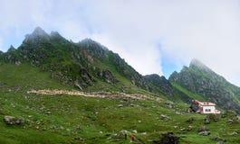 De wandelaars die op toerist lopen slepen in bergen stock foto's