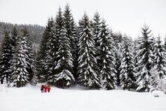 De wandelaars op sneeuw hellen in snow-covered bos bij grijze de winterdag Royalty-vrije Stock Fotografie