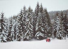 De wandelaars op sneeuw hellen in snow-covered bos bij grijze de winterdag Stock Afbeelding