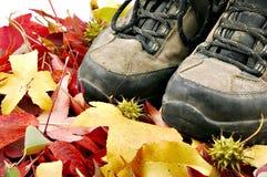 De Wandeling van de herfst Stock Foto's