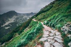 De wandelingssleep op de groene helling Tatras Royalty-vrije Stock Fotografie