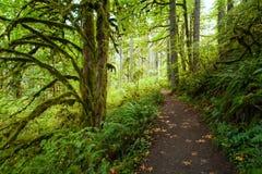 De wandelingssleep in Zilver valt het Park van de Staat, Oregon in de herfst stock foto's