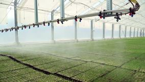 De warering zaailingen van de irrigatiemachine die in dienbladen in grote serre worden geplant stock footage