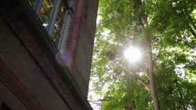 De warme de lentezon die door de luifel van lange beukbomen glanzen stock footage