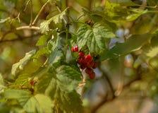 De warme herfst Stock Afbeelding