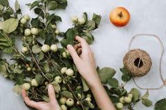 De warme herfst flatlay met appeltakken, vruchten, streng en vrouwen` s handen stock afbeelding