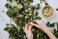 De warme herfst flatlay met appeltakken, vruchten, streng en vrouwen` s handen royalty-vrije stock fotografie