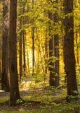 De warme, idealistische zonsondergang van de de zomermening Stock Foto