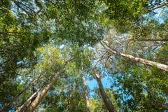 De warme de lentezon die door bomen, boom glanzen die omhoog eruit zien royalty-vrije stock afbeelding