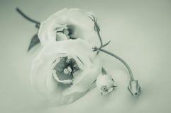 De warme tonen van Rose Vintage Flowers In Stock Afbeelding