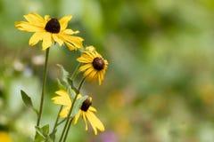 De warme Zomer Wildflowers royalty-vrije stock afbeeldingen