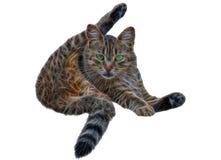 De was van de kat zelf royalty-vrije stock fotografie