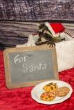 De Wasbeer van babykerstmis Royalty-vrije Stock Fotografie