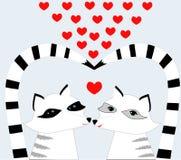 De Wasberen van Nice in liefde Stock Fotografie
