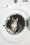 De wasmachine en de kat van kleren Stock Foto's