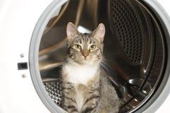 De wasmachine en de kat van kleren Stock Afbeeldingen