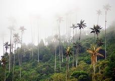 De waspalmen van Cocora-Vallei zijn de nationale boom, het symbool van Colombia en de grootste palm van World's stock fotografie