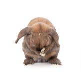 De wassen van het konijn. Stock Foto