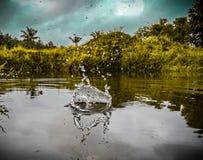 De waterdalingen freezed stock fotografie