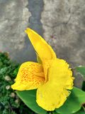 De waterdalingen op bloem kijken als een diamant royalty-vrije stock afbeeldingen