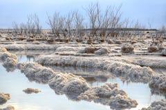 De wateren van het Dode Overzees tussen de zoute vormingen met bomen op hen bij zonsopgang stock afbeeldingen