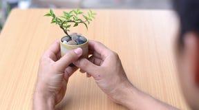 De waterjasmijn is de gemeenschappelijke die naam voor Wrightia-religiosa, de verscheidenheid voor bonsai wordt gebruikt Royalty-vrije Stock Afbeeldingen