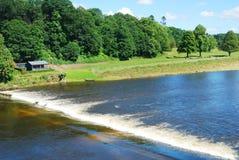 De waterkering van de Tweed van de rivier, weide dichtbij Coldstream Stock Foto