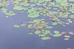 de waterleliesvlotter op het water royalty-vrije stock afbeelding
