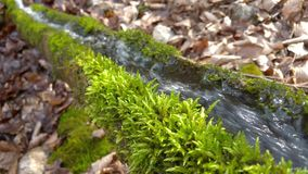 De waterlente in trog stock video