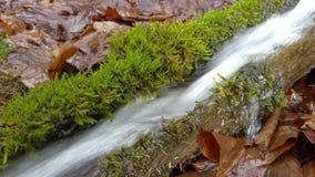 De waterlente in trog stock footage