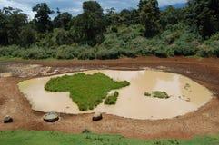De waterpoel van Afrika stock foto