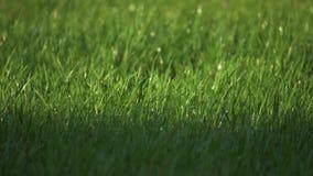 De watersproeier bestrooit een groen gazon dichtbij het huis levensstijl het water geven het concept van de grassproeier stock footage