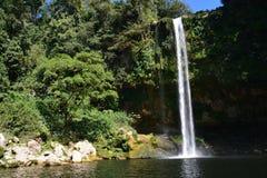 De Waterval Chiapas Mexico van Misolha stock afbeeldingen