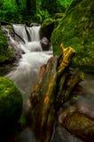 De waterval in het natuurlijke bos stock afbeeldingen