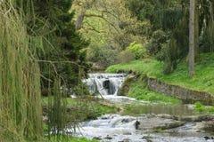 De Waterval van het park Stock Afbeeldingen
