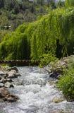 De waterval van de rivier in het bos stock afbeeldingen