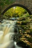 De waterval van Yorkshire in schitterende de Herfstkleur Stock Fotografie