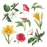 De waterverf bloeit inzameling Royalty-vrije Stock Afbeelding