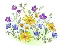 De waterverf bloeit viooltjes en viooltje en gaat op weide weg Stock Foto
