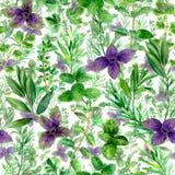 De waterverf groen naadloos patroon van kruidenkruiden vector illustratie