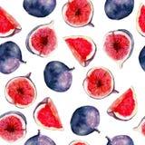 De waterverf naadloos patroon van het fig.fruit Helder tropisch die fruit op witte achtergrond wordt geïsoleerd Stock Afbeeldingen