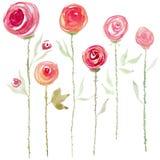 De waterverf nam bloemen toe vector illustratie
